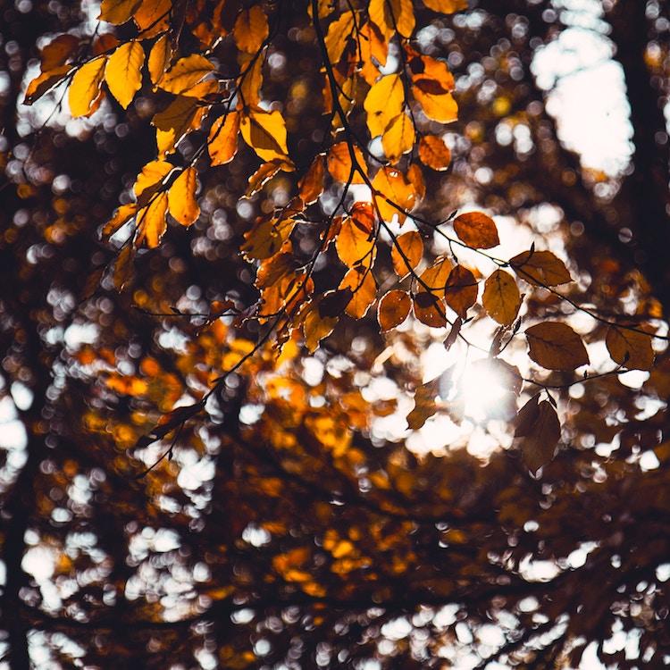 Menopause autumn